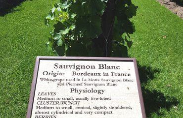 Bord: info Sauvignon Blanc